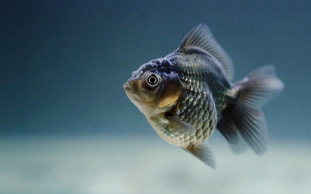Ist der Fisch frisch? 3 Tipps, woran Sie das erkennen